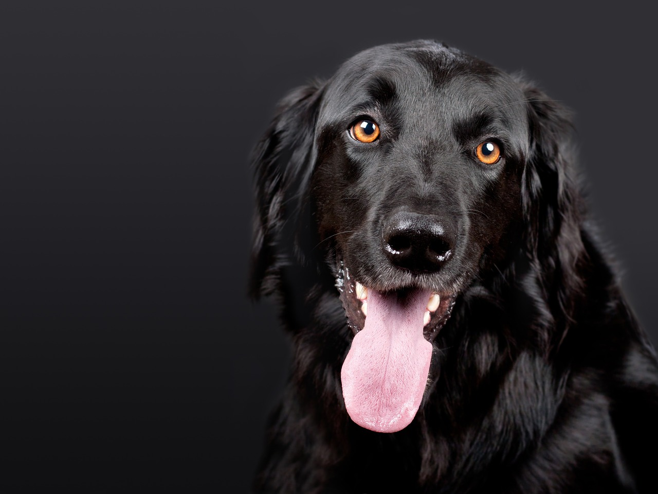 太子獸醫是給寵物看病的首選